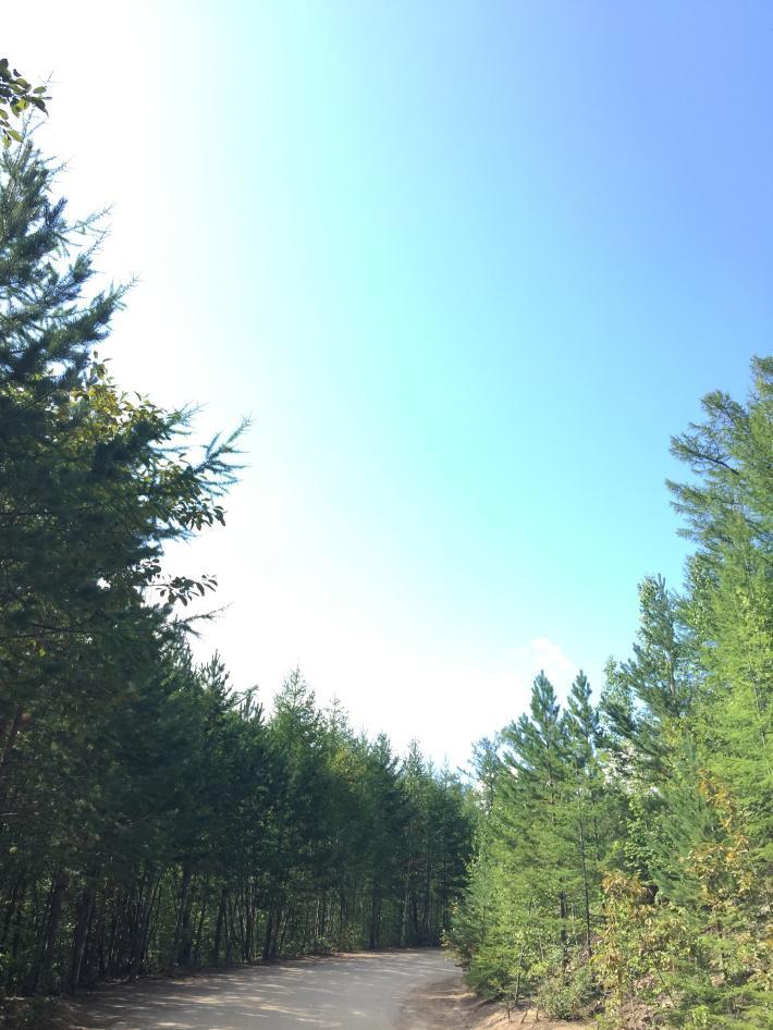 莫尔道嘎森林公园
