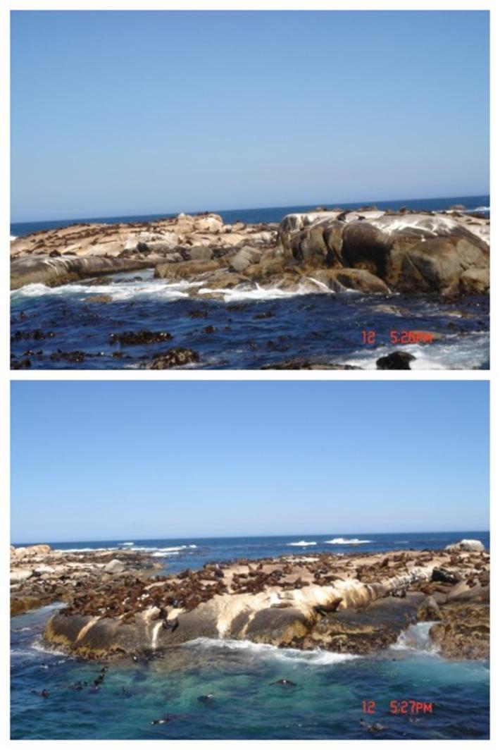 开普敦海豹岛
