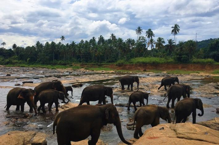斯里兰卡大象孤儿院