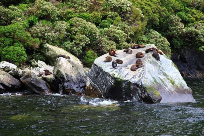 米佛峡湾(Milford Sound)
