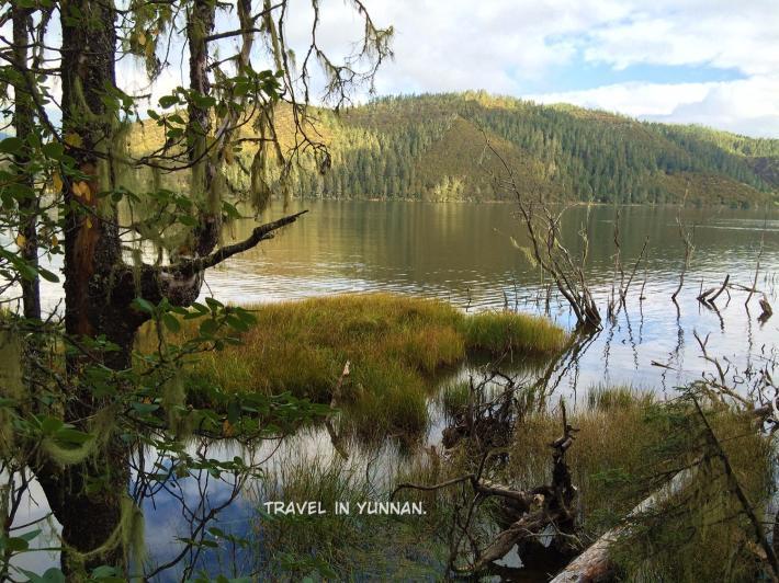 普达措森林公园