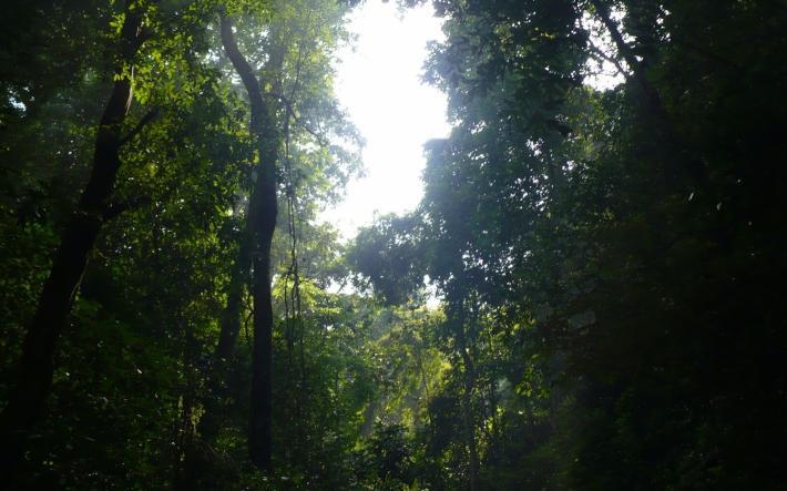 望天树景区