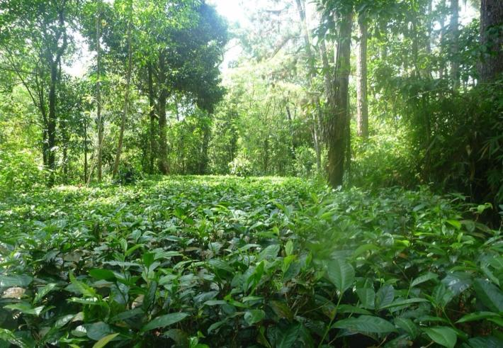 西双版纳原始森林公园