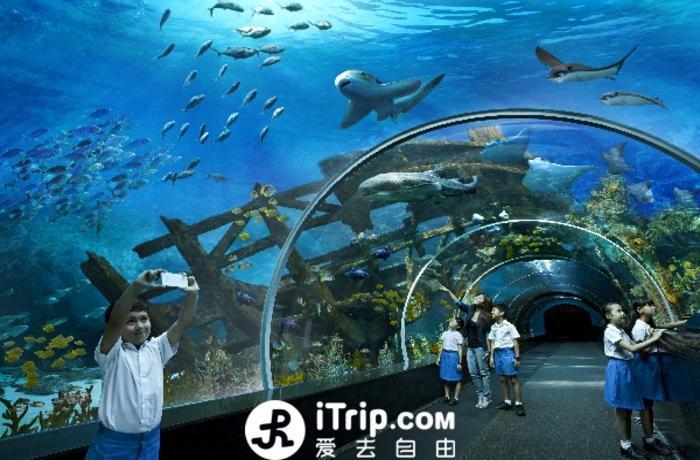 【当地玩乐】新加坡S.E.A海洋馆门票.等待确认