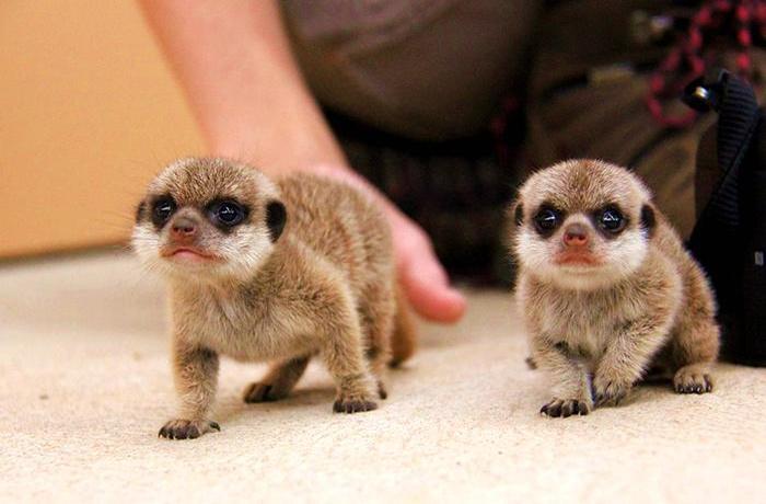 【当地玩乐】澳大利亚悉尼达博塔龙加西部平原动物园门票(自驾推荐).等待确认