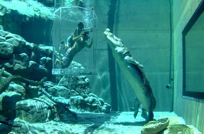 【当地玩乐】澳大利亚鳄鱼主题公园+达尔文随上随下观光车套票.等待确认