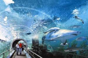 曼谷-【当地玩乐】曼谷暹罗海洋世界门票.等待确认