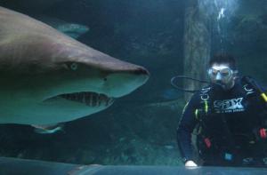 澳大利亚-【当地玩乐】澳大利亚悉尼曼利海洋生物保护区门票+鲨鱼伴游体验.等待确认
