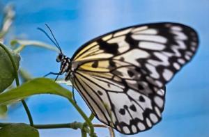 新加坡-【当地玩乐】新加坡圣淘沙岛蝴蝶园与昆虫王国门票(电子兑换凭证).等待确认