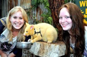 澳大利亚-【当地玩乐】澳大利亚珀斯凯维森野生动物园门票(免费与考拉近距离接触合影) 自驾推荐.等待确认