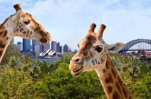澳大利亚-【当地玩乐】澳大利亚悉尼塔龙加(Taronga)动物园门票.等待确认