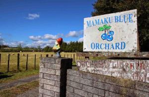 新西兰-【当地玩乐】新西兰罗托鲁瓦 马马库蓝莓农场门票(自驾前往).等待确认