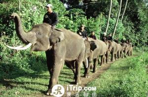 巴厘岛-【当地玩乐】巴厘岛大象野生动物园上午半日游.等待确认