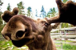 芬兰-【当地玩乐】芬兰 罗瓦涅米 拉努阿北极野生动物园半日游.等待确认