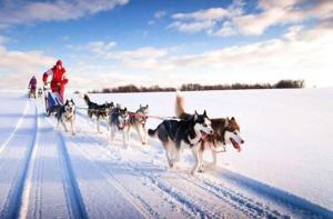 芬兰-【当地玩乐】芬兰 禹拉斯  哈士奇雪橇+极地国家公园半日游.等待确认