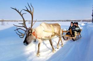芬兰-【当地玩乐】芬兰 罗瓦涅米 驯鹿农场观光之旅(3小时).等待确认