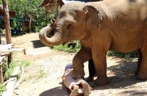 清迈-【当地玩乐】清迈美莎大象营骑大象+Dragon Flight丛林飞跃一日游(中文导游).等待确认
