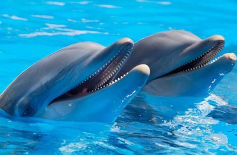 【当地玩乐】普吉岛 尼莫海豚馆·海豚表演门票.