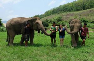清迈-【当地玩乐】清迈美旺大象保育中心半日游.等待确认