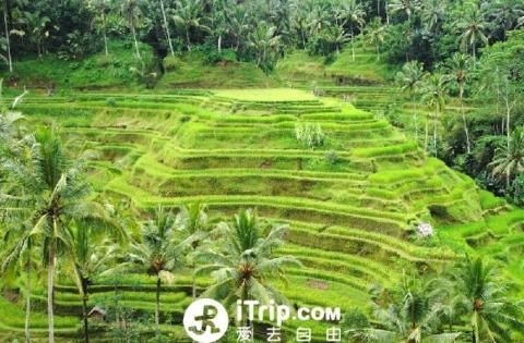 【当地玩乐】巴厘岛北线一日游