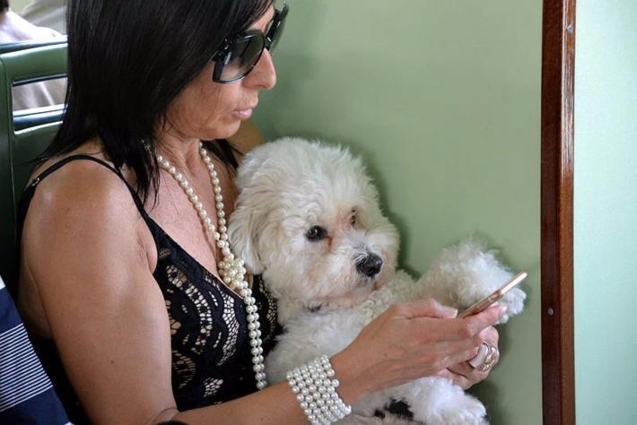 船舱里一位女士在与她的爱犬共同玩着手机(注意,那个宝贝可不是玩具喔)
