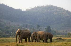 清迈-【当地玩乐】清迈冉彤Ran Tong大象保护中心半日游一日游.等待确认