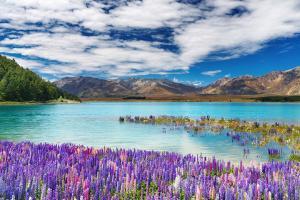 基督城-【尚·博览】新西兰南北岛8天*冰川峡湾<纯净冰川,米佛峡湾,毛利文化村,蒂卡波湖>