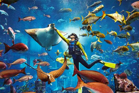 【酒店套餐】三亚亚特兰蒂斯水世界 水族馆3天2晚套餐*等待确认