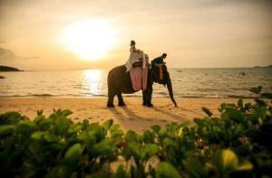 普吉岛-【当地玩乐】普吉岛骑大象(观日落).等待确认