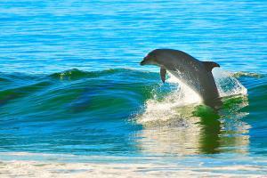美国-【典·深度】美国关岛5天*ABC俱乐部出海追踪海豚*住杜梦湾中心位置<南部观光,鱼眼海洋公园,免税购物之优选>