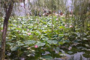 佛山-【跟团游】清远1天*飞来湖湿地公园、花卉小镇*桃花谷赏百亩桃花<佛山>