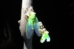 智趣营-【智趣营】广州1天*华南农业大学树木园*魔法自然之夏夜探秘<知识课堂>