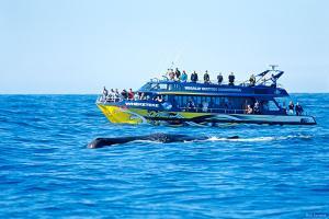 基督城-【尚·深度】新西兰南北岛13天*穿越之旅*美酒美食*纯玩<首都惠灵顿,观鲸,海鲜游船>