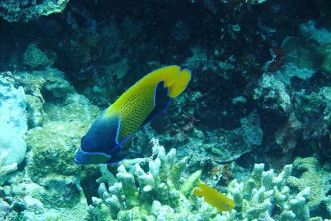 美娜多5天*活力浮潜<布纳肯出海浮潜,含浮潜装备,深潜理论课程,世界第二大基督耶稣像>