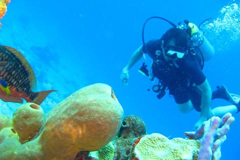 美娜多5/6天*初级潜水员考证*广州往返<专业教练教学,专业装备配备>
