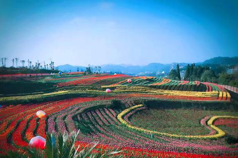 贵州包列3-5天.羊昌郁金香小镇.万亩油菜花海.黄果树