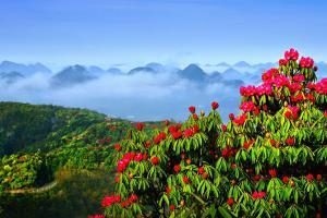 黄果树-【典·深度】贵州、安顺、毕节、织金、双飞5天*洞天美瀑<赏花,黄果树,织金洞,直飞毕节>