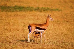 肯尼亚-【猎奇】肯尼亚8/9天*动物追踪*广州往返<马赛马拉动物追踪,河马天堂奈瓦沙湖,地球遗址东非大裂谷>