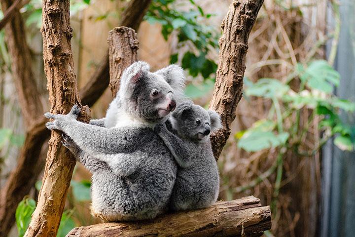 【自由行】澳洲8-12天*机票+上网卡<南方航空>