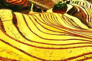 桂林-【典·深度】桂林、龙脊、阳朔、动车3天*竹筒饭*杀猪宴*乐游<龙脊特色客栈>