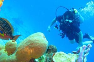 泰國-【潛水考證】泰國普吉5天*機票+初級或進階潛水員考證*廣州往返*等待確認<PADI中文小班教學,專業潛水裝備,贈送普吉島三大海灘到潛水中心往返接送>