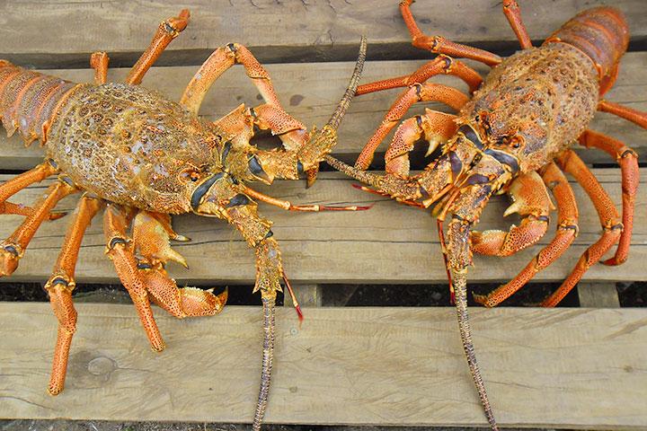 【颂·深度】新西兰南岛9天*冰川峡湾*皇后镇连住三晚*海鲜美食*纯玩<冰川观光飞机,出海抓龙虾,现抓现吃三文鱼>