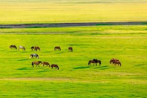 内蒙古-【沙漠嘉年华】呼和浩特、鄂尔多斯、双飞5天*内蒙古大草原*响沙湾沙漠嘉年华<入住沙漠景区酒店,草原特色蒙古包>