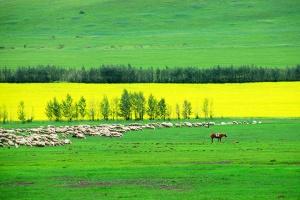 呼伦贝尔-【典·联游】哈尔滨、呼伦贝尔、额尔古纳、满洲里、漠河、双飞6天*呼伦贝尔大草原*北极村<大美草原>