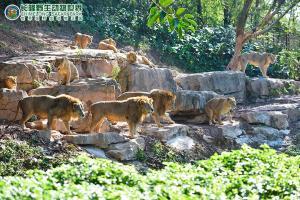 广州长隆野生动物世界 门票