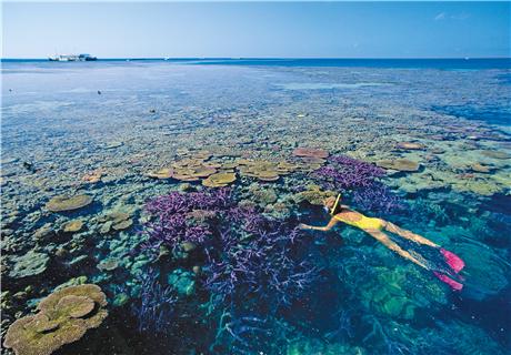 【尚·博览】澳洲8/9天*大堡礁*澳经典<赠送与考拉合照,穿梭亿年热带雨林>