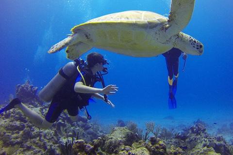 【潜水考证当地玩乐】马来西亚登嘉楼5天*初级潜水员考证+月之影度假村4晚*等待确认<中文小班教学,PADI五星潜水中心,天鹅岛/登莪岛考证>