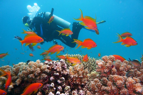 【潜水考证当地玩乐】泰国苏梅岛4天*初级潜水员考证*等待确认<涛岛PADI考证,中文小班教学,专业装备配备>