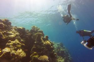 泰國-【潛水考證】泰國芭提雅5天*初級潛水員考證*重慶往返*等待確認<專業中文小班教學,專業潛水裝備>
