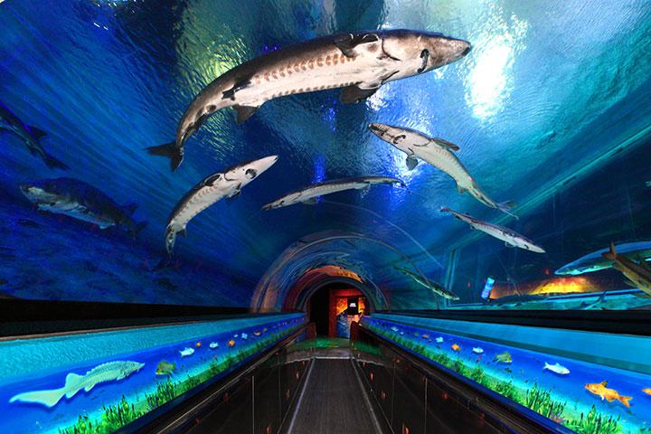 【乐园】香港海洋公园1天*双程*直通巴士*当天往返交通+海洋公园门票